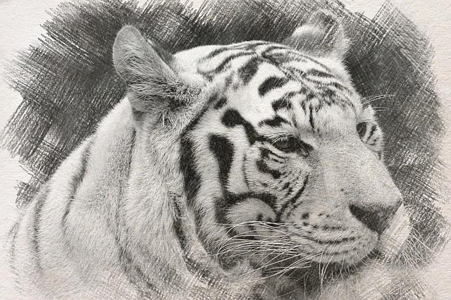 drawing-3764625_640